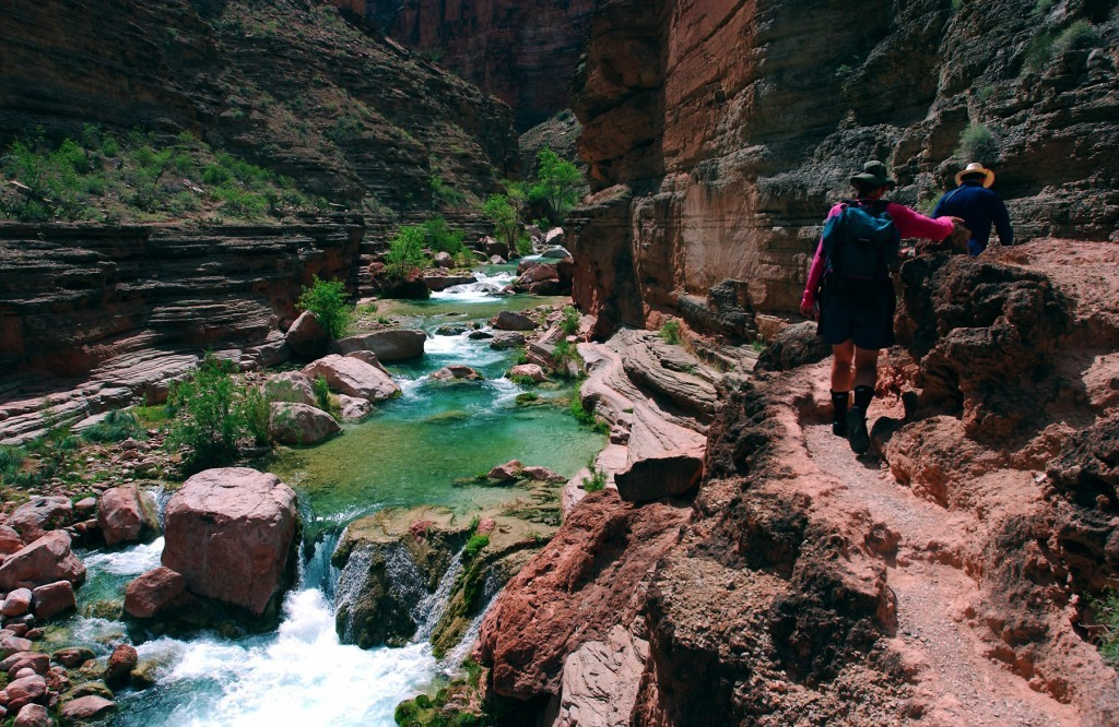 ELEMENTS: Spiny Discoveries in the Grand Canyon