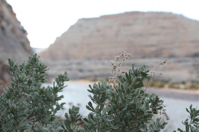 sage on the yampa river