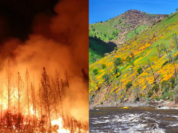 Did the Rim Fire Ruin the Tuolumne River?